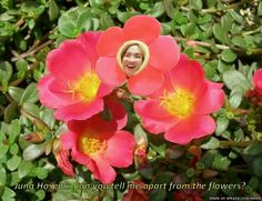 The most beautiful flower on the planet
