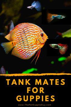 20 Gallon Aquarium, Cory Catfish, Neon Tetra, Cherry Shrimp, Fishing For Beginners, Fish Care, Hiding Spots, Tank You, Aquarium Decorations