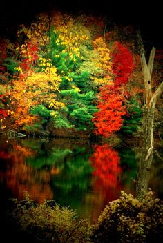 flowersgardenlove:  ✮ Reflecting on Fall Beautiful