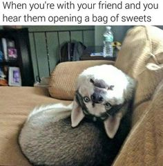 Talking dog videos are so funny. Check out these funny talking dogs. Well, actually dogs trying to talk. Funny Animal Jokes, Funny Dog Memes, Cute Funny Animals, Funny Animal Pictures, Animal Memes, Cute Baby Animals, Funny Cute, Funny Dogs, Cute Puppies