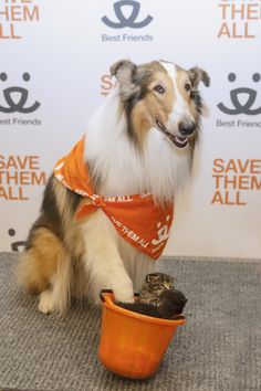 The Best Friends National Conference just wrapped up in Las Vegas, and among the attendees was Lassie! She's making a difference for homeless pets, like this little bucket of kittens who came from an area rescue. Together, we can Save Them All!
