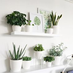 all white: pots & shelves