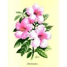 Image 3D Fleur - Rhododendron rose 24 x 30 cm