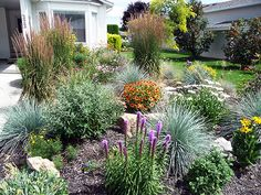 xeriscape small front yard | the xeriscape garden early summer 2010 wayne s vibrant lush xeriscape ...