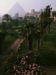Cairo, Egypt - best hotel view is at what was Mena House Hotel and is now a Marr. - Cairo, Egypt – best hotel view is at what was Mena House Hotel and is now a Marriott. Places To Travel, Places To See, Pyramids Egypt, Luxor Egypt, Top 10 Instagram, Beste Hotels, Egypt Travel, Das Hotel, Menorca