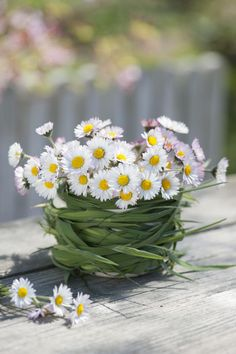 Gänseblümchen in Vase