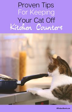 Discover how to keep cats off counters and keep them a strictly kitty free zone! Plus, why your cat loves counter tops so much. Cats And Kittens, Ragdoll Kittens, Funny Kittens, Bengal Cats, White Kittens, Adorable Kittens, Black Cats, Kitty Cats, Cat Care Tips