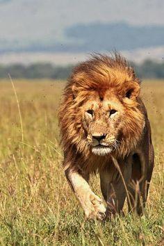 Kenya safari - en oplevelse for livet