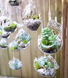 This listing is for 10 hand blown glass terrariums for your wedding or garden party.They can be hung for a beautiful display. Rope included Each Terrariums Wedding Favors Glass Hanging 190 by uniquelywed on Etsy 35 Most Creative Succulent Wedding Ideas 7 Hanging Terrarium, Hanging Succulents, Glass Terrarium, Succulent Terrarium, Succulents Garden, Mini Terrarium, Terrarium Wedding Favor, Succulent Wedding Favors, Terraria
