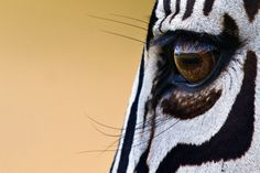 Perfect eyeliner! (=