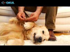 Köpeğimi Eğitiyorum - 1. Bölüm - TRT Okul Dogs, Youtube, Animals, Animales, Animaux, Pet Dogs, Doggies, Animal, Animais
