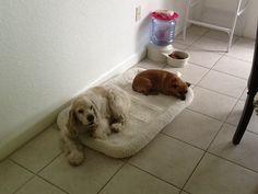 Mis perritos :)