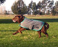 Grey with aqua trim Dog Coats, Cow, Aqua, Grey, Animals, Gray, Water, Coats For Dogs, Animaux