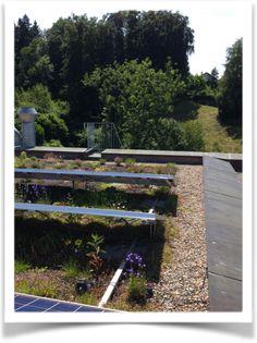 Des toits végétalisés extensifs axés sur la biodiversité combinés à l'énergie solaire – une pratiques innovante en Suisse