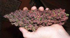 Marijuana Can Decrease Anxiety - #MMJ #Anxiety - http://marijuanaworldnews.com/marijuana-can-decrease-anxiety/