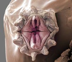 Community Post: Six Terrifying Photos Of Deep-Sea-Dwelling Bristle Worms