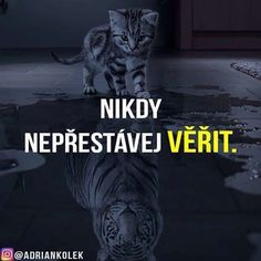 Nikdy nepřestávej věřit!  #motivacia #uspech #czech #slovak #penize #business #success #lifequotes Tabu, True Words, Monday Motivation, Wallpaper Quotes, Motto, Quotations, Jokes, Positivity, Lol