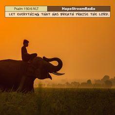 Thanking God. Praise The Lords, Praise God, Top Bible Verses, Psalm 1, Elephant, Animals, Animales, Animaux, Animal