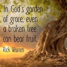 In God's garden of grace, even a broken tree can bear fruit. - Rick Warren