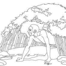 Dibujo del HÁBITAT DEL HOMO HABILIS - Dibujos para Colorear y Pintar - Dibujos para colorear HISTORIA - PREHISTORIA dibujos para colorear Homo Habilis, Projects For Kids, 3, Illustration, Google, Free Coloring Pages, Prehistory, Kids Service Projects, Illustrations