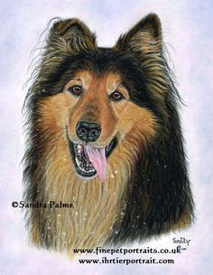 Collie German Shepherd dog portrait
