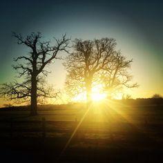 Windsor great park, sunrise