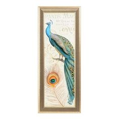 Majestic Peacock II Framed Art Print