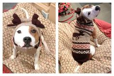 Moosey Dog Sweater with Antlers & Ears by Chilly Dog