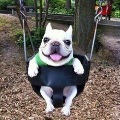 I put my dog in a swing at a park. Please like!!!!!!!! His name is Nash. Lol copied from Nash Grier. I found this in my Iphone this was along time ago