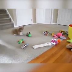 Shop Now>>Jumping Rolling Chasing Moving Pet Toys Animals And Pets, Funny Animals, Cute Animals, Disney Background, Therapy Dogs, Dog Hacks, Dog Crate, Funny Animal Videos, Dog Houses