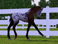 Sims 3 Foals foal crop 2013 | Show Name- PBE Teeny Spots