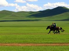Blue sky, green grass, hoses gallop on the prairie, travel to Inner Mongolia prairie,  a beautiful scenery