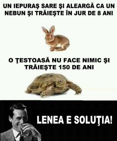 Rabbit Jumping, Parenting Humor, Funny Jokes, Turtle, Like4like, Lol, Memes, Instagram Posts, Pictures