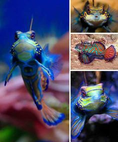 1000 images about unusual fish on pinterest fish for Do all fish have scales