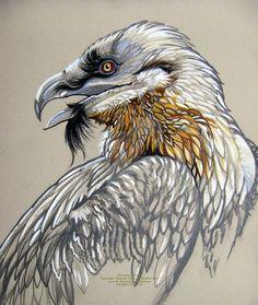 Bearded Vulture by HouseofChabrier.deviantart.com on @DeviantArt