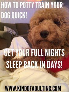 HOW TO CRATE TRAIN YOUR PUPPY to sleep through the night in a matter of DAYS!!! | Kind Of Adulting #puppypottytrainingin3days