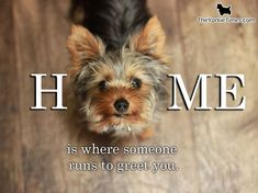 I know this feeling every, single day!!! Super Grateful! I ♥ my Yorkie!