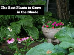 Best plants to grow in the shade. Shaded gardens can be pretty, too! Photo by Sue Manus