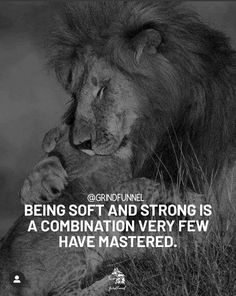 Private Life Quotes, Lion Quotes, How To Become, Positivity, Sayings, Community, Animals, Content, Instagram