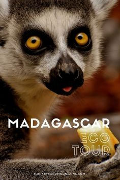 On our Madagascar tour, you'll hike in 3 national parks, visit community reserves, and see lemurs and other wildlife for an incredible trip to Madagascar. Flying Lemur, Madagascar Travel, Vacation Is Over, Beach Trip, The Great Outdoors, Trip Planning, Lemurs, Adventure Travel, Travel Inspiration