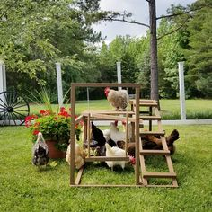 playground ideas Awesome playground ideas For Kids playground ideas Fun playground ideas Products Backyard playground for the chickens. Cheap Chicken Coops, Portable Chicken Coop, Best Chicken Coop, Chicken Coop Plans, Building A Chicken Coop, Chicken Roost, Types Of Chickens, Keeping Chickens, Raising Chickens