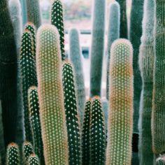 Cacti love |Photo via