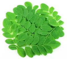Moringa tree leaves is a standout amongst the most essential restorative plant on earth. It is equipped for treating more than 300 illnesses. The powdered type of the leaf is utilized for its high therapeutic qualities. Different parts of the tree like bark, seeds, root, leafy foods likewise have emmence restorative qualities.