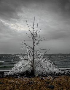 ✯ Winters Grip