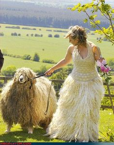 I want a stubborn goat or sheep at my wedding!  I'm willing to forgo all other expenses in order to accommodate this!