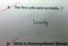 test answers that are totally wrong but still genius