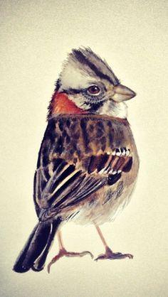 Chincol Sparrows, Fauna, Beautiful Butterflies, Watercolors, Wildlife, Animation, Gardening, Bird, Illustration