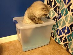 DIY top entry Cat Litter box from a large tupperware! keeps dogs out of the litter and keeps litter from getting everywhere! Can also keep cat food in a box like this to keep dogs or bigger cats out.