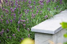 Tuin inspiratie lavendel Stepping Stones, Outdoor Decor, Home Decor, Lavender, Stair Risers, Decoration Home, Room Decor, Interior Design, Home Interiors