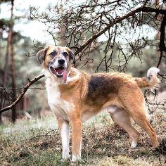 Heute spät und kurz: Wir wünschen euch einen guten Start in die neue Woche. ⠀⠀⠀⠀⠀⠀⠀⠀⠀ Für Kane steht heute wieder ein Bürotag an. Wessen Hund darf denn noch mit zur Arbeit? ⠀⠀⠀⠀⠀⠀⠀⠀⠀ Und weil ich schon gefragt wurde, Kane ist in den letzten zwei Wochen nicht gewachsen. Dafür macht er fleißig Muskeln und ist jetzt bei 24 kg. 😁 Er ist jetzt nicht nur größer, sondern auch schwerer als Enki. . . . #herzenshund #hundeportrait #besterhund #pfotenliebe #petfluencer #spazierenmithund #...